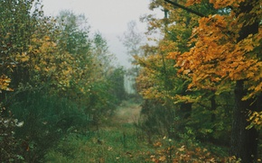 Picture grass, autumn, leaves, fog, way, pathway, autumn colors, countryside, path, mist, fall, foliage, cloudy, woodland, …