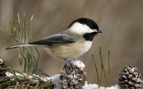 Picture winter, snow, bird, bumps, titmouse
