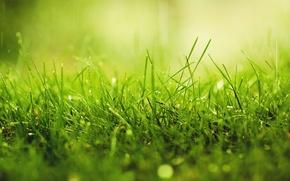 Picture greens, grass, drops, macro, Rosa, rain, solar