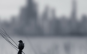 Picture background, bird, Melancholy