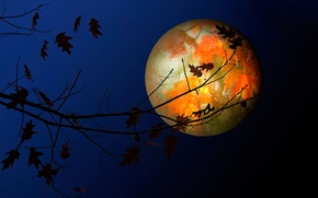 Picture leaves, the moon, texture