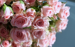 Picture reflection, roses, pink