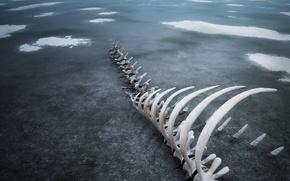 Wallpaper ice, 154, bones, skeleton