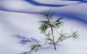Picture sand, desert, tree