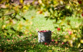Picture summer, the sun, apples, harvest, bucket, lawn