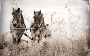 Picture field, style, background, horses, wagon