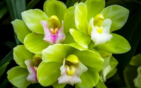 Picture macro, green, Orchid