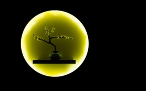 Picture the moon, round, branch, vase, ikebana