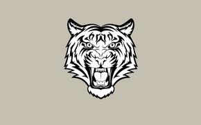 Picture face, tiger, minimalism, light background, tiger