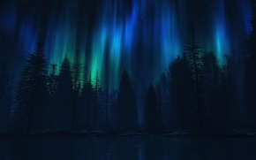 Picture forest, water, trees, night, lake, lights, spruce