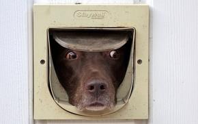 Picture look, each, dog, the door