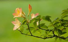 Wallpaper branch, Flower, green