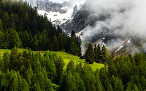 Picture Nature, Mountains, Switzerland, Forest, Alps