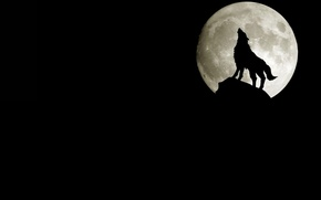 Picture rock, the moon, wolf, silhouette, howling