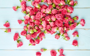 Picture Board, roses, Pink, Roses, background, color