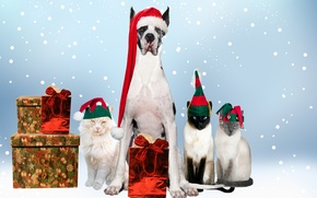 Picture dog, balls, New Year, holiday, decoration, New Year, Christmas, Christmas, as