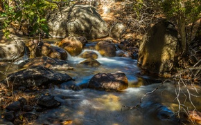 Picture forest, trees, river, stones, thickets, stream