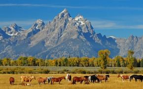 Picture autumn, the sky, landscape, mountains, horse, the herd