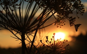 Picture the sky, sunset, dill