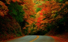 Picture road, autumn, forest, paint, USA, North Carolina, October