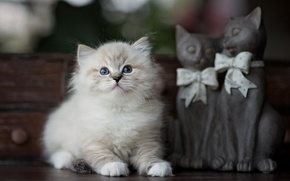 Picture cat, kitty, table, fluffy, small, bows, box, figures, sculpture, blue-eyed, figurines, ragdoll