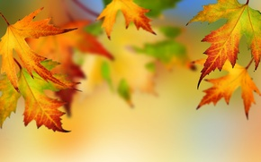 Picture autumn, leaves, bright colors