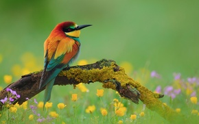 Wallpaper flowers, Golden bee-eater, peeled, branch, bird