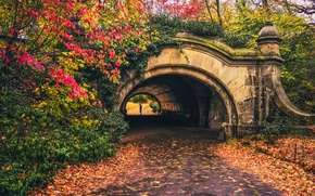 Picture autumn, leaves, trees, the way, foliage, people, New York, Brooklyn, silhouette, the tunnel, United States, …