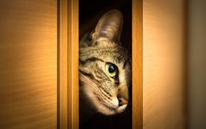 Picture cat, cat, look, face, wardrobe, Peeps, doors