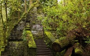 Wallpaper Park, ladder, trees, the bushes, moss, Oregon, steps, greens, house, Forest Park, forest, Portland, USA