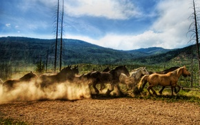 Picture horse, the herd, jump