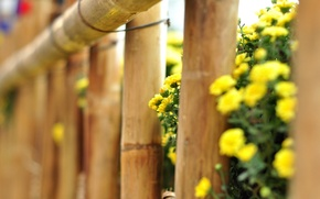 Picture macro, flowers, yellow, background, tree, widescreen, Wallpaper, the fence, fence, the fence, wallpaper, flowers, flower, ...