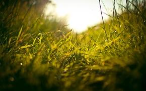 Wallpaper greens, field, grass, macro, freshness, weed, path, stems, travicka, stem