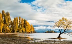 Picture autumn, trees, lake