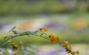 Picture flowers, branch, garden, yard