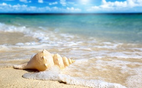 Picture sand, beach, the ocean, shell