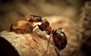 Wallpaper macro, drop, ant