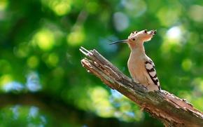 Picture nature, bird, branch, beak