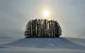Picture winter, the sky, the sun, snow, trees, hill