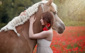 Picture summer, girl, horse