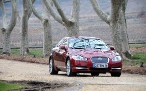Wallpaper Jaguar, Burgundy, machine