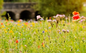 Picture field, grass, flowers, bridge, river, Mac, meadow