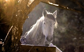 Picture nature, tree, horse
