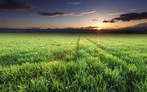 Picture field, the sun, rays, Spring, April