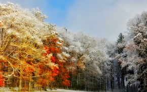 Wallpaper frost, the sky, autumn, trees, forest