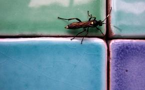 Picture tile, cockroach, Beetle