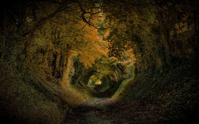 Picture trees, Park, England, slope, the tunnel, United Kingdom, Halnaker
