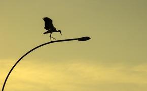 Picture sunset, yellow, nature, background, bird, street, color, wings, shadow, minimalism, paws, stork, lantern, Aistenok