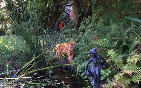 Picture garden, pond, fall