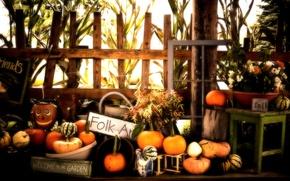 Wallpaper Halloween, Pumpkins, Fall, Autumn